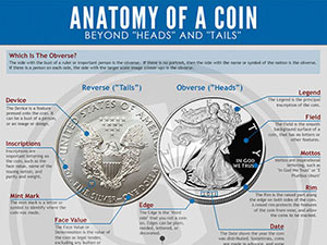 Anatomy Of A Coin Infographic