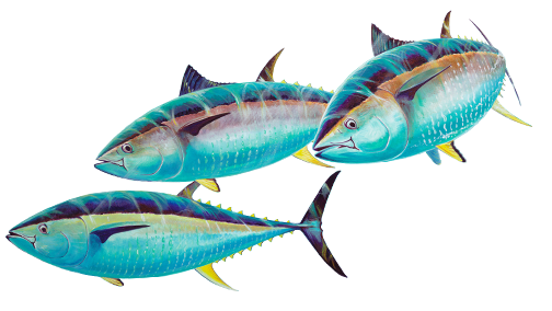 Guy Harvey Group Fish