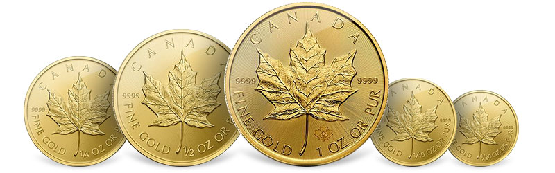 gold maple leafs coins